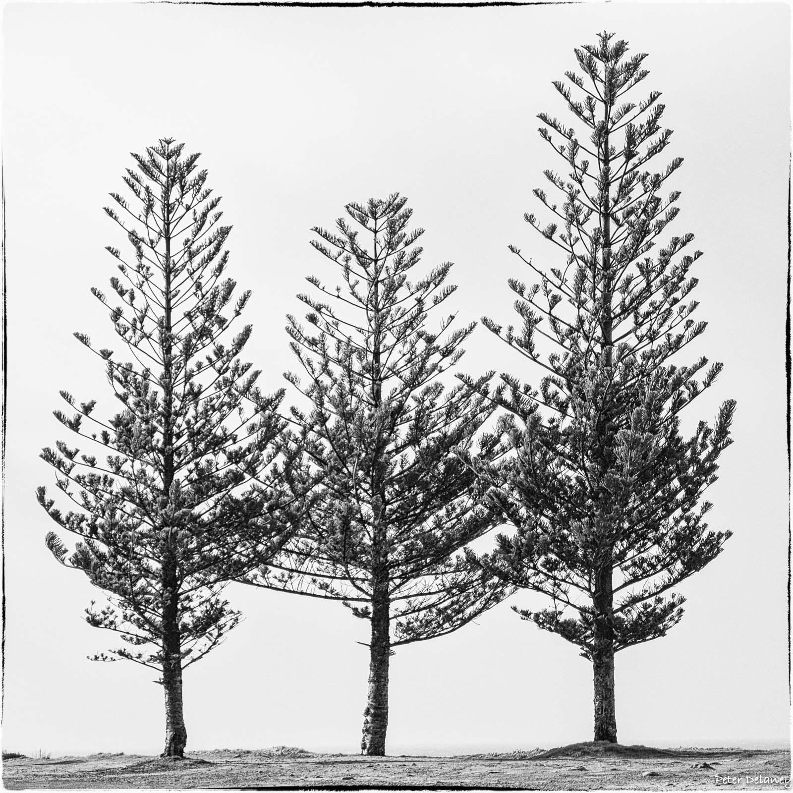 Trinity of Trees