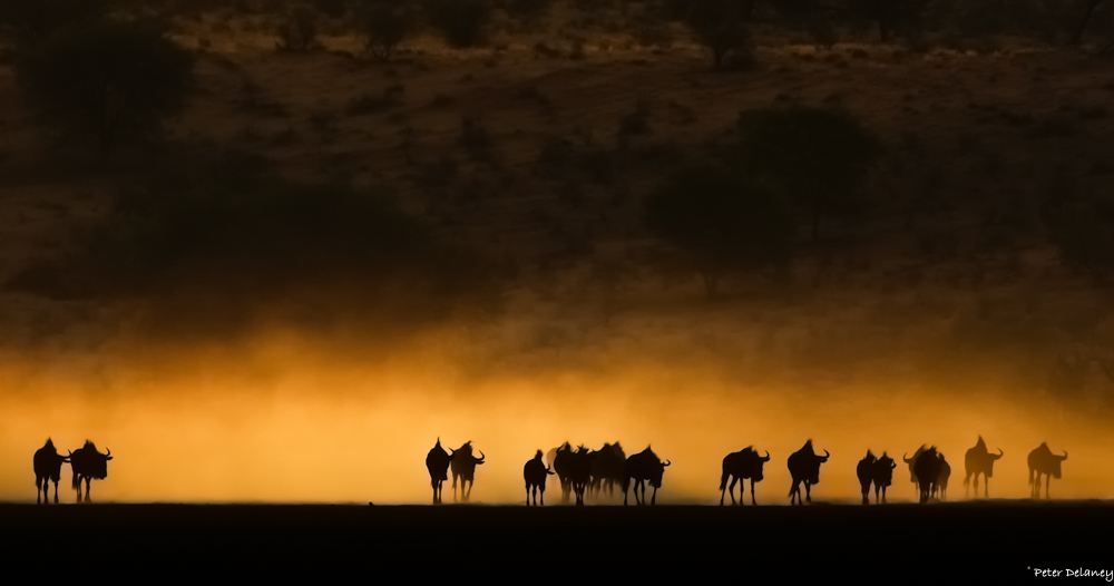 Wildebeest Trek