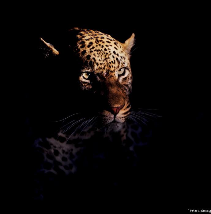 Night Stalker,