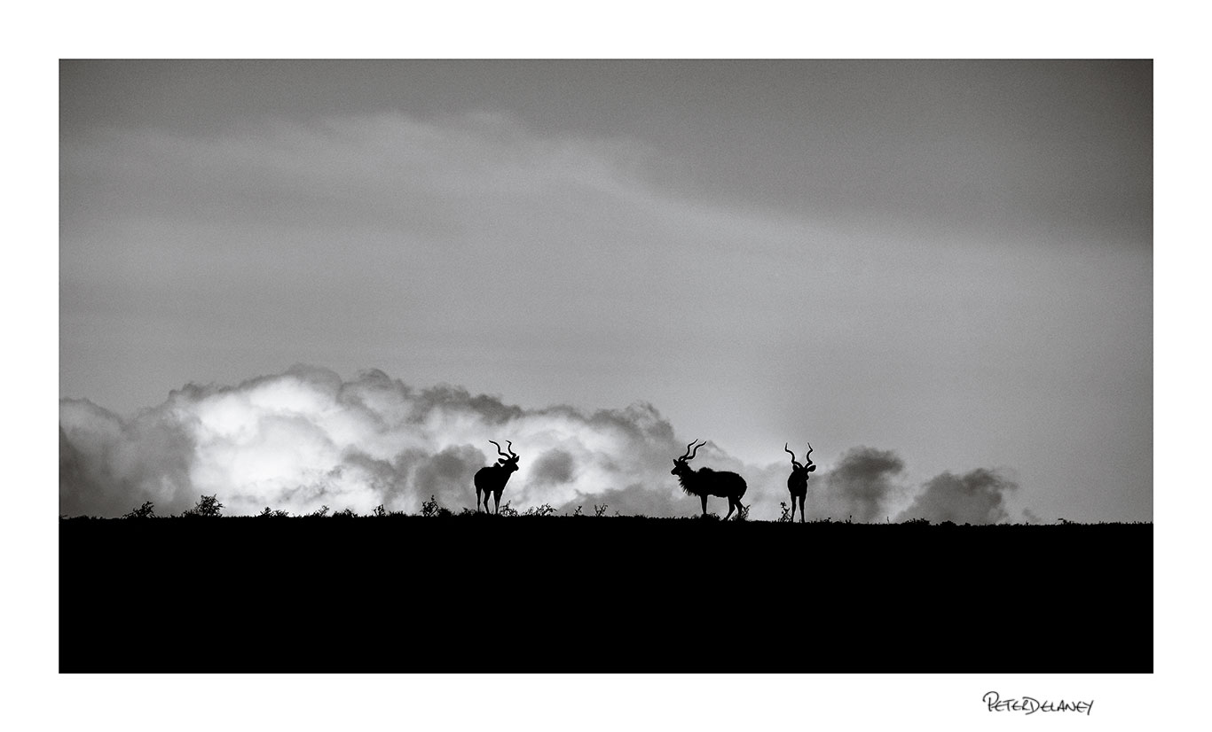 Kudus and Clouds