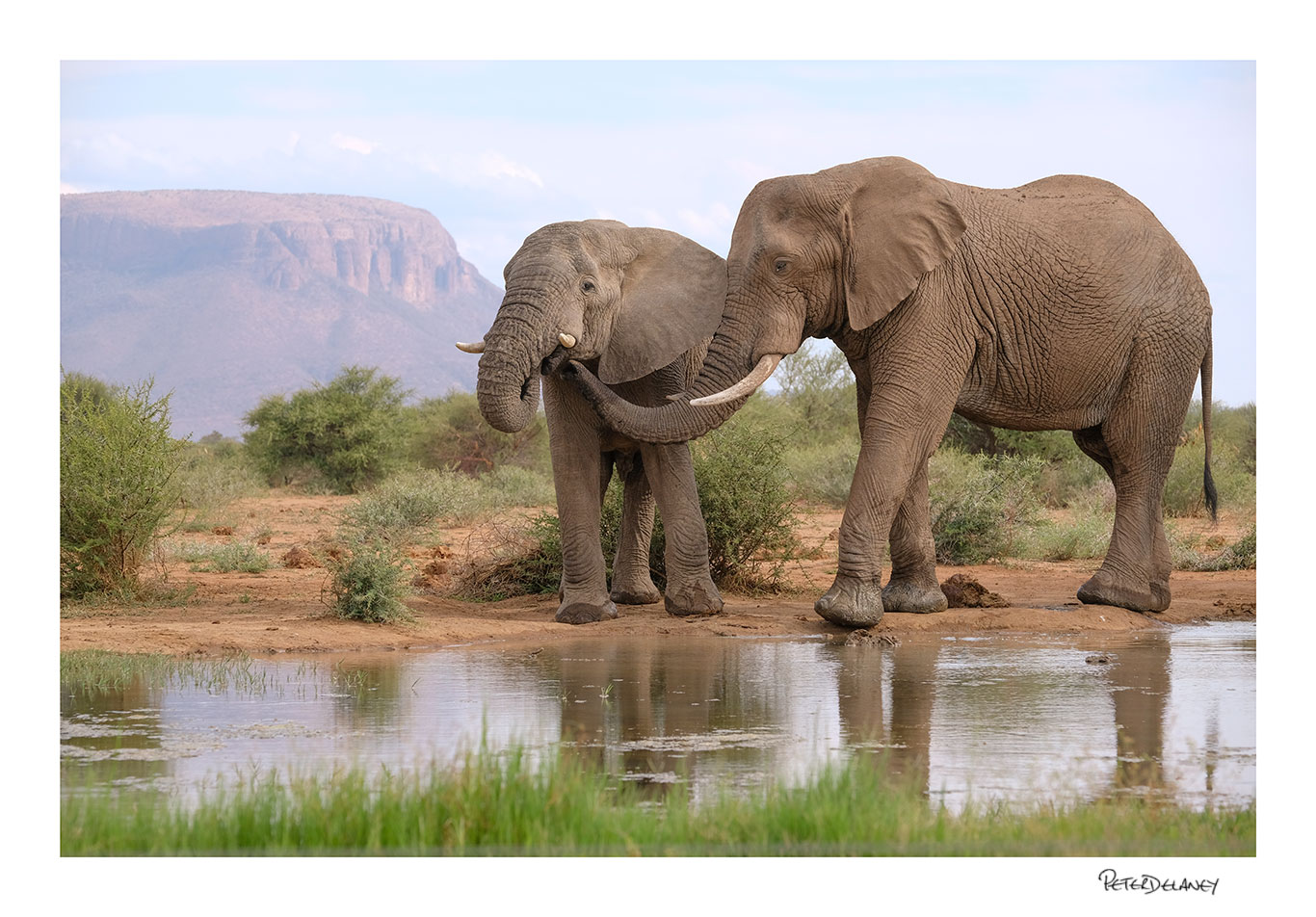 Elephants and mountains.jpg