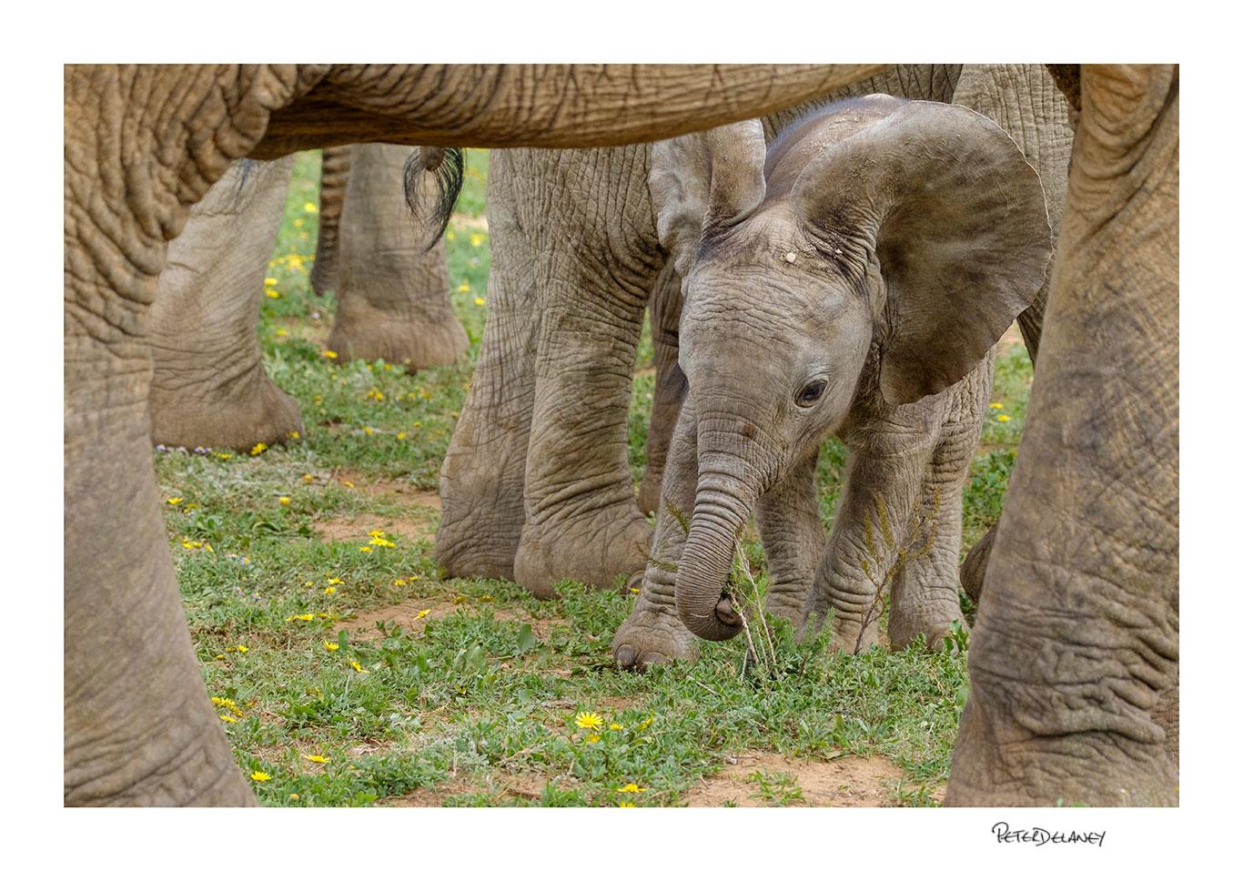 Bany elephant frame.jpg