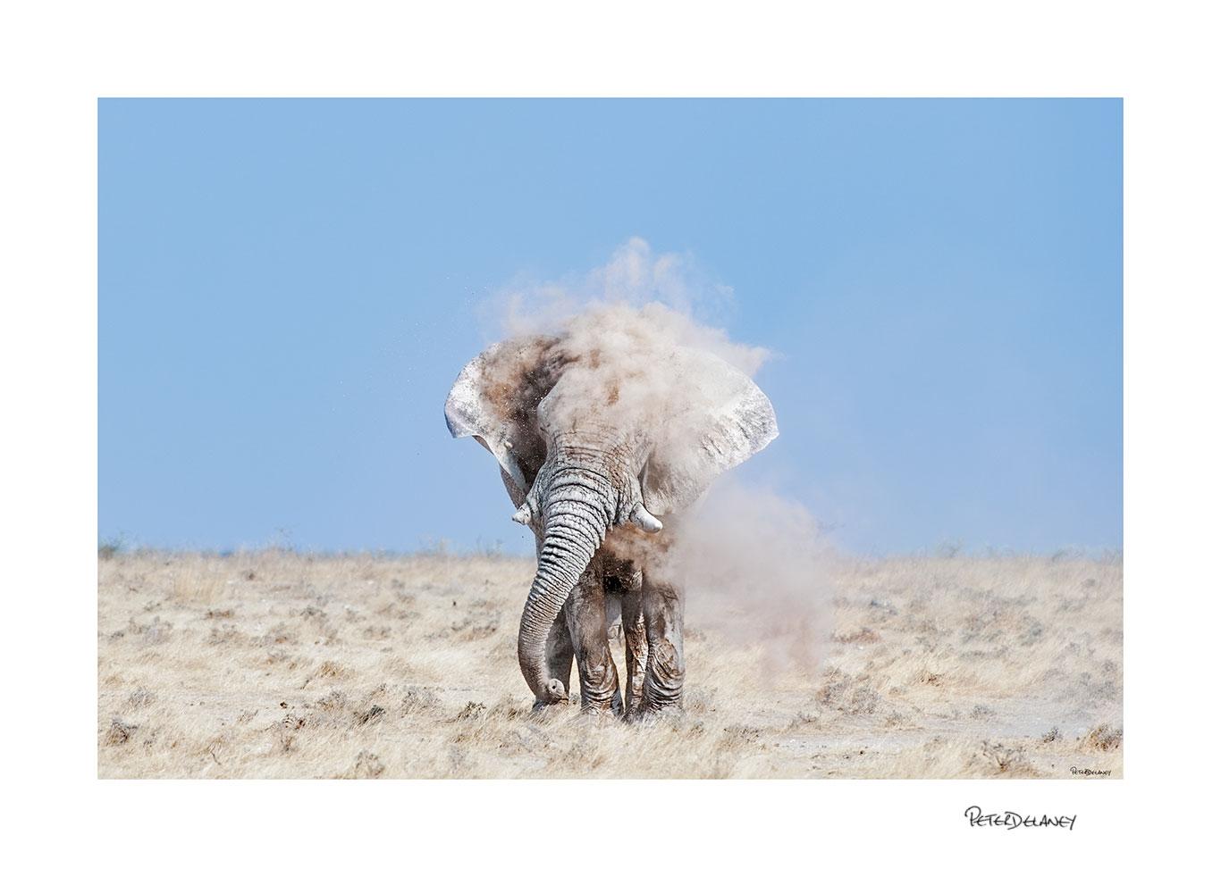 Godfather-Bull-Elephant.jpg