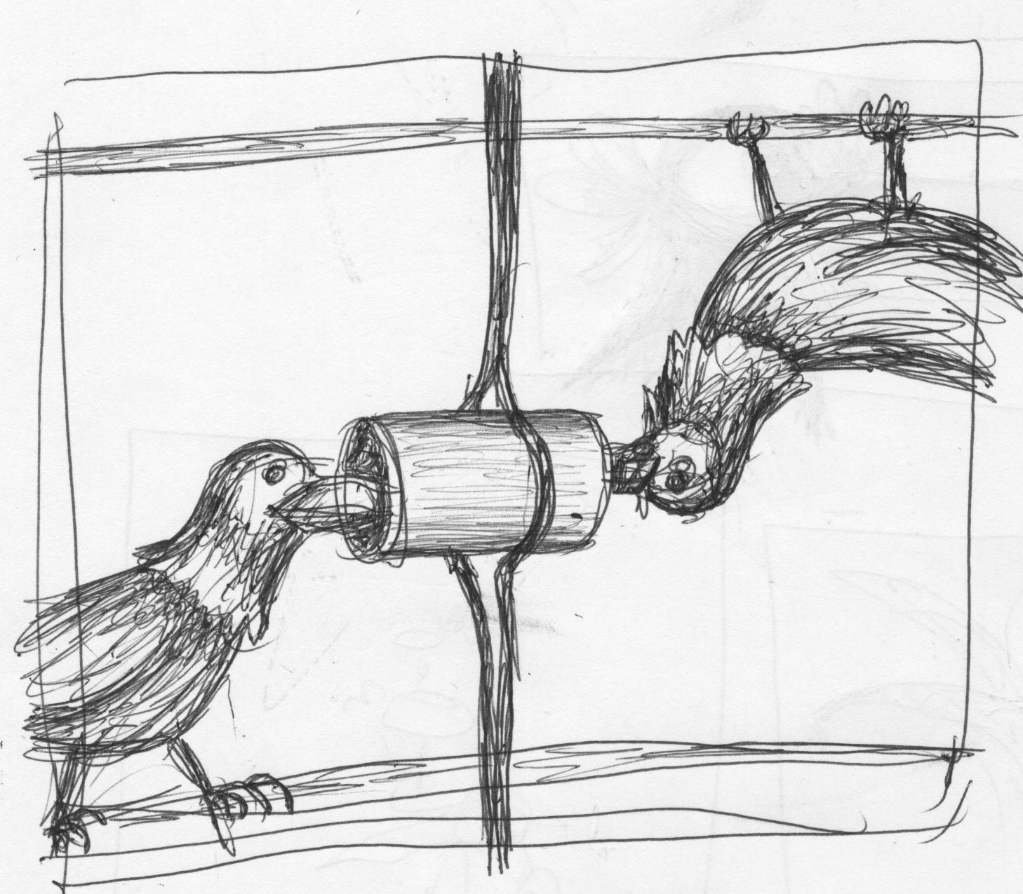 Communicating crows deftly defy gravity.