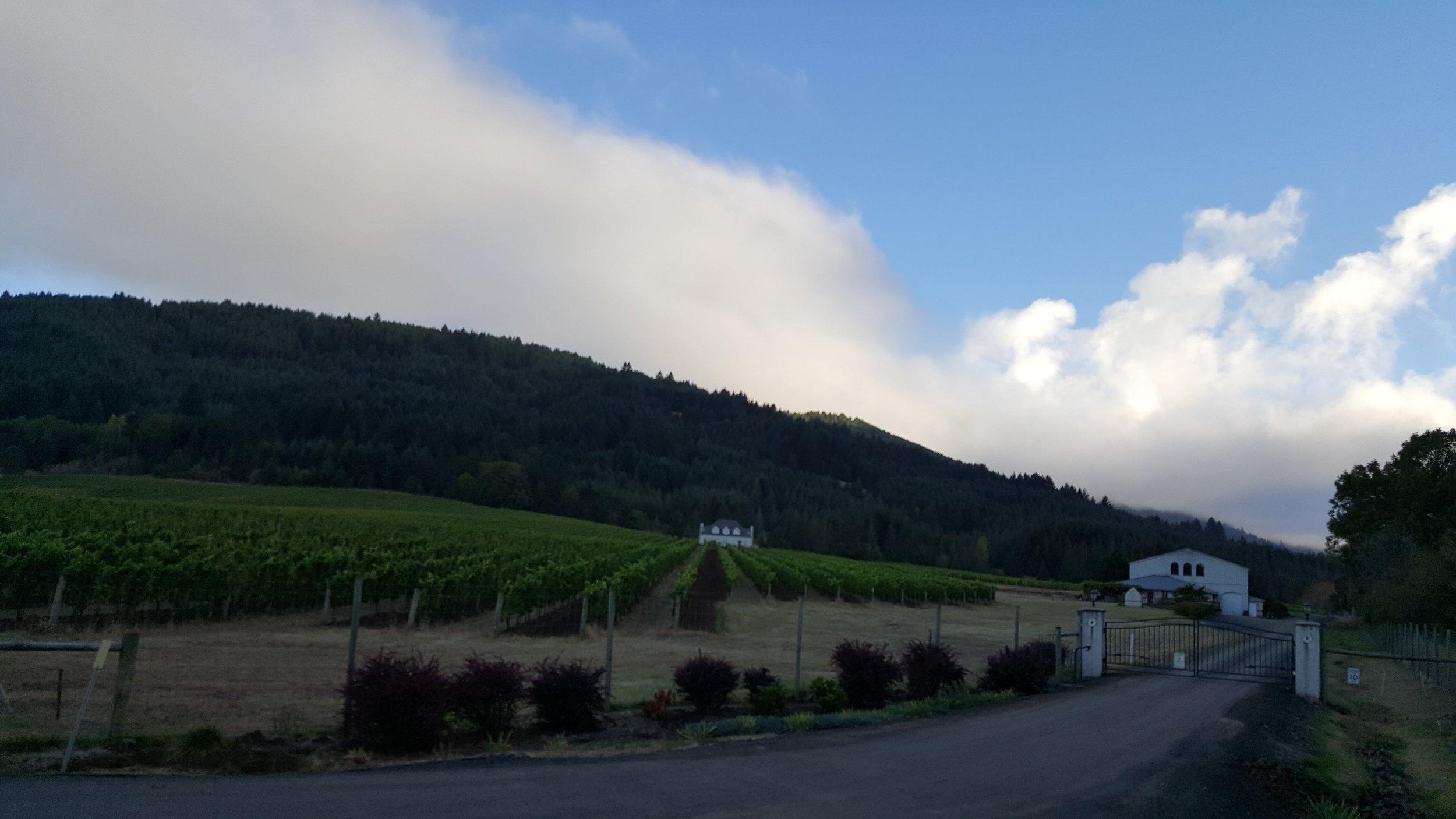 Vineyard sighting