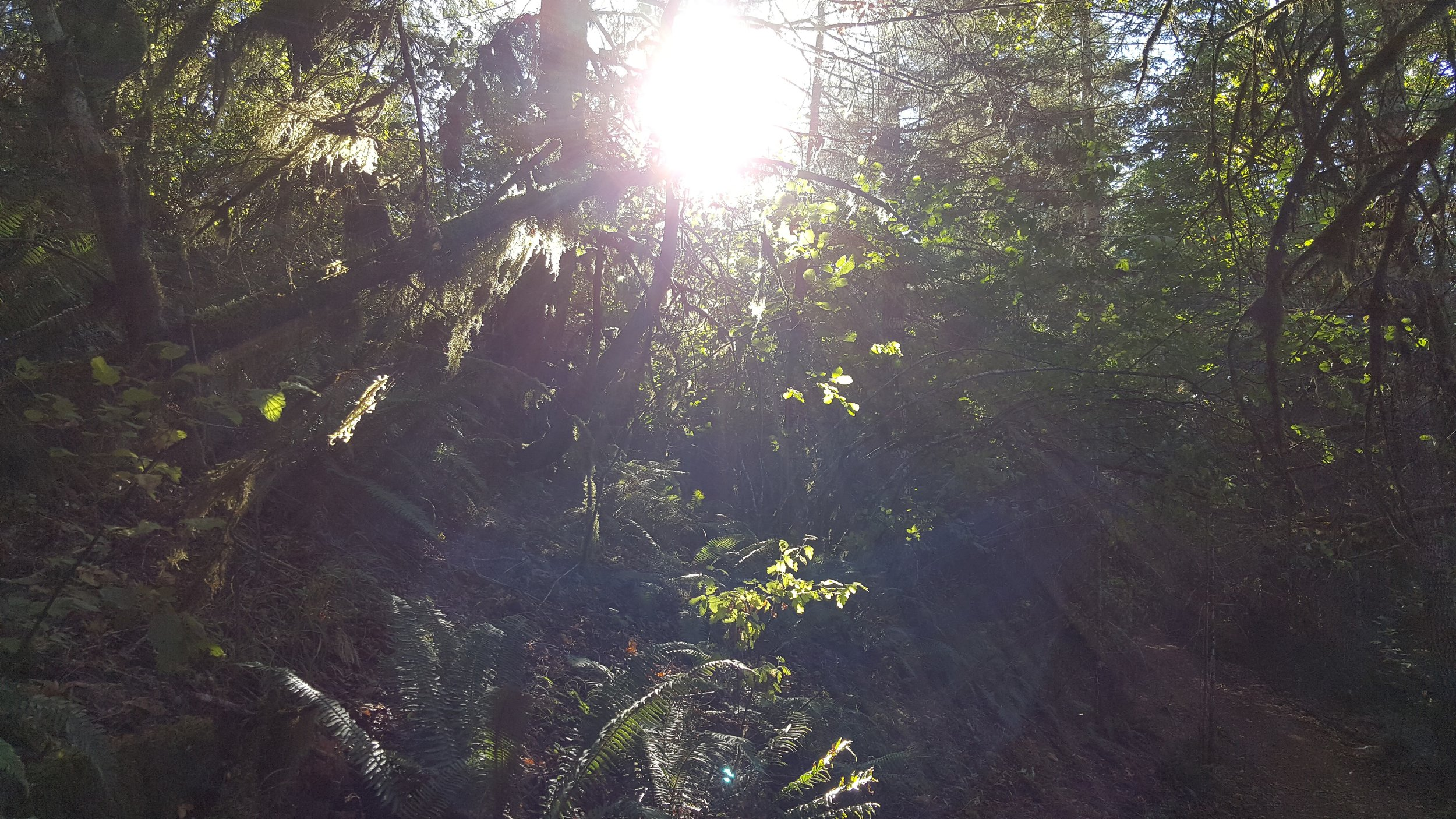 Light pouring into the forest