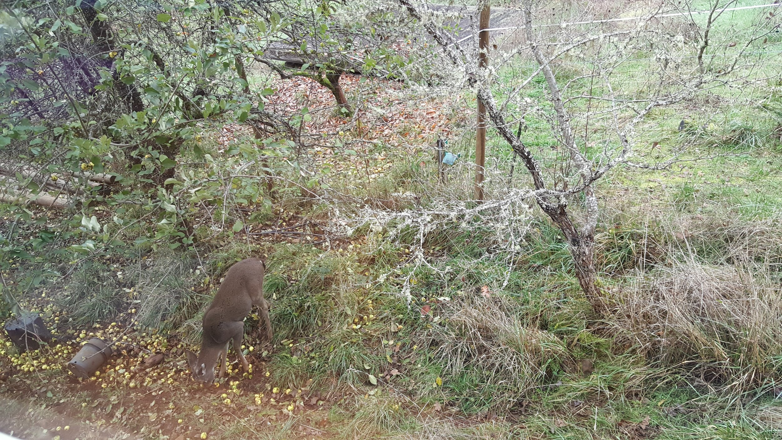View from the dining room.. frequently the deer like to come to this spot for the apples falling off the apple tree