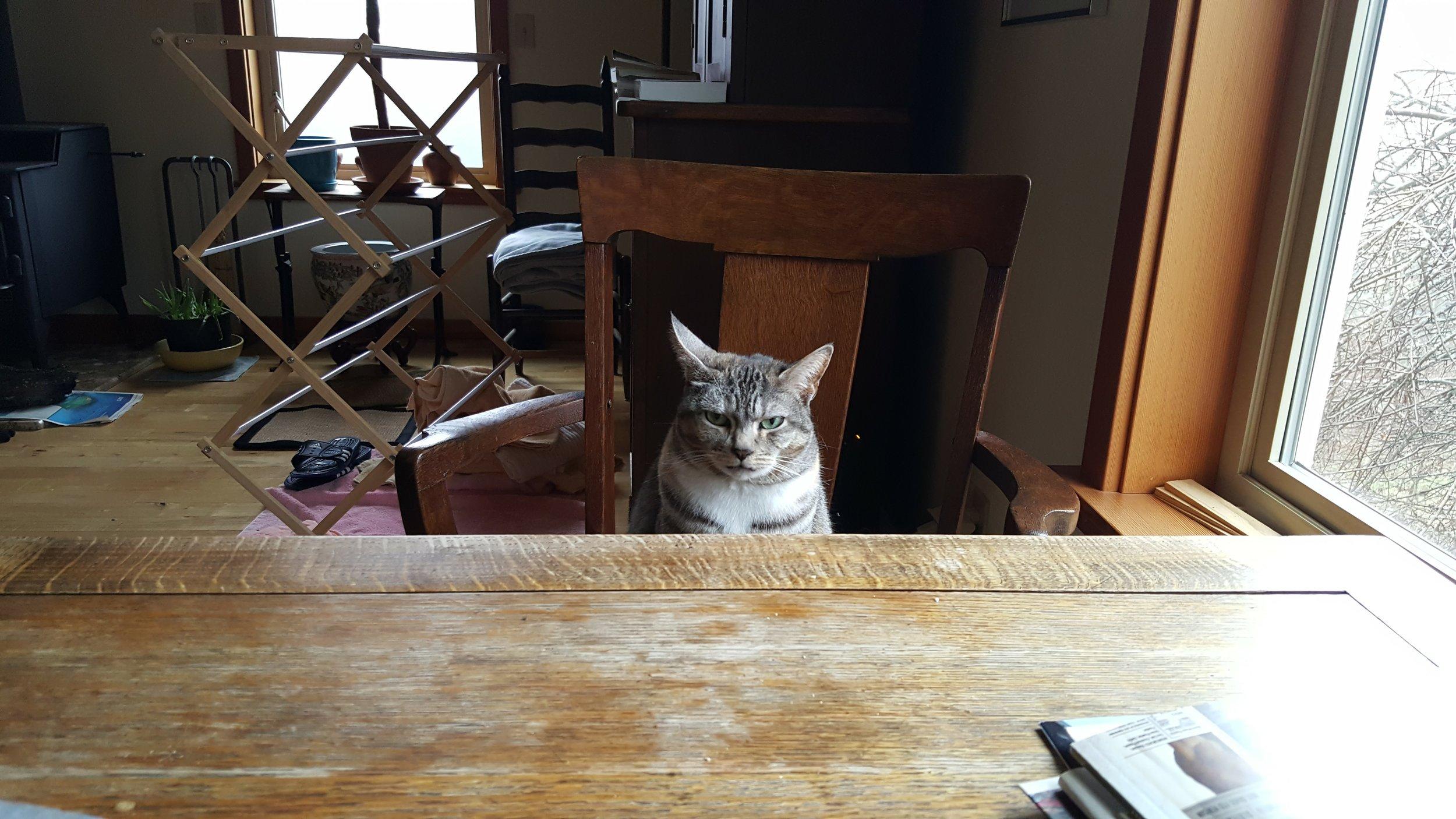 My daily breakfast companion