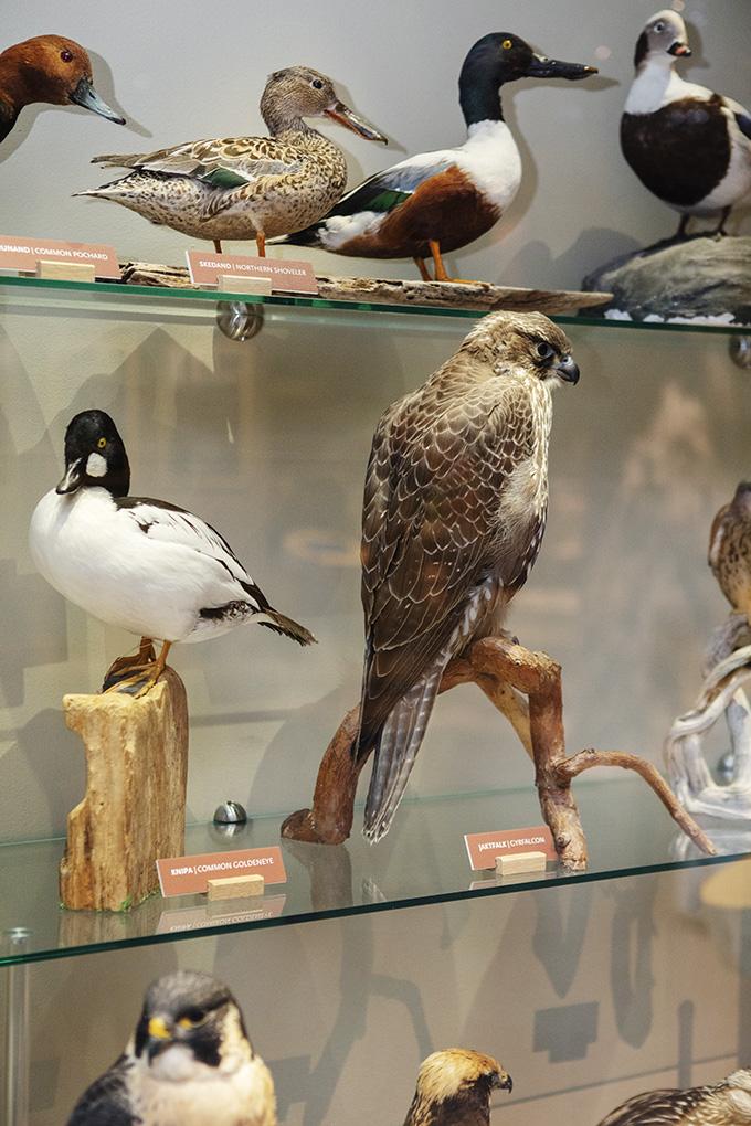 Fåglar 2_web.jpg