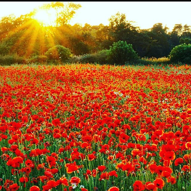 At the going down of the sun and in the morning, we will remember them ❤️ #lestweforget #remembrance #remembrancesunday . . Gorgeous photo by @clivenichols #repost
