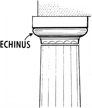 Pearson Scott Foresman,  Echinus , 16 March 2010. An illustration of a column labeled Echinus against a white background.