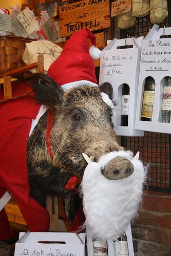 santa wild boar