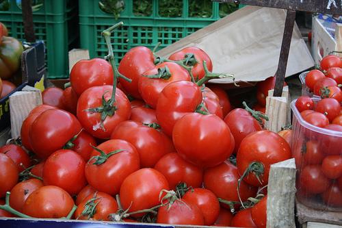 tomatoes www.talkoftomatoes.com