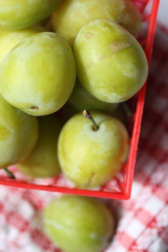 yellow plums via talkoftomatoes.com