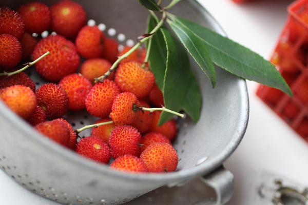 irish strawberries | talkoftomatoes.com