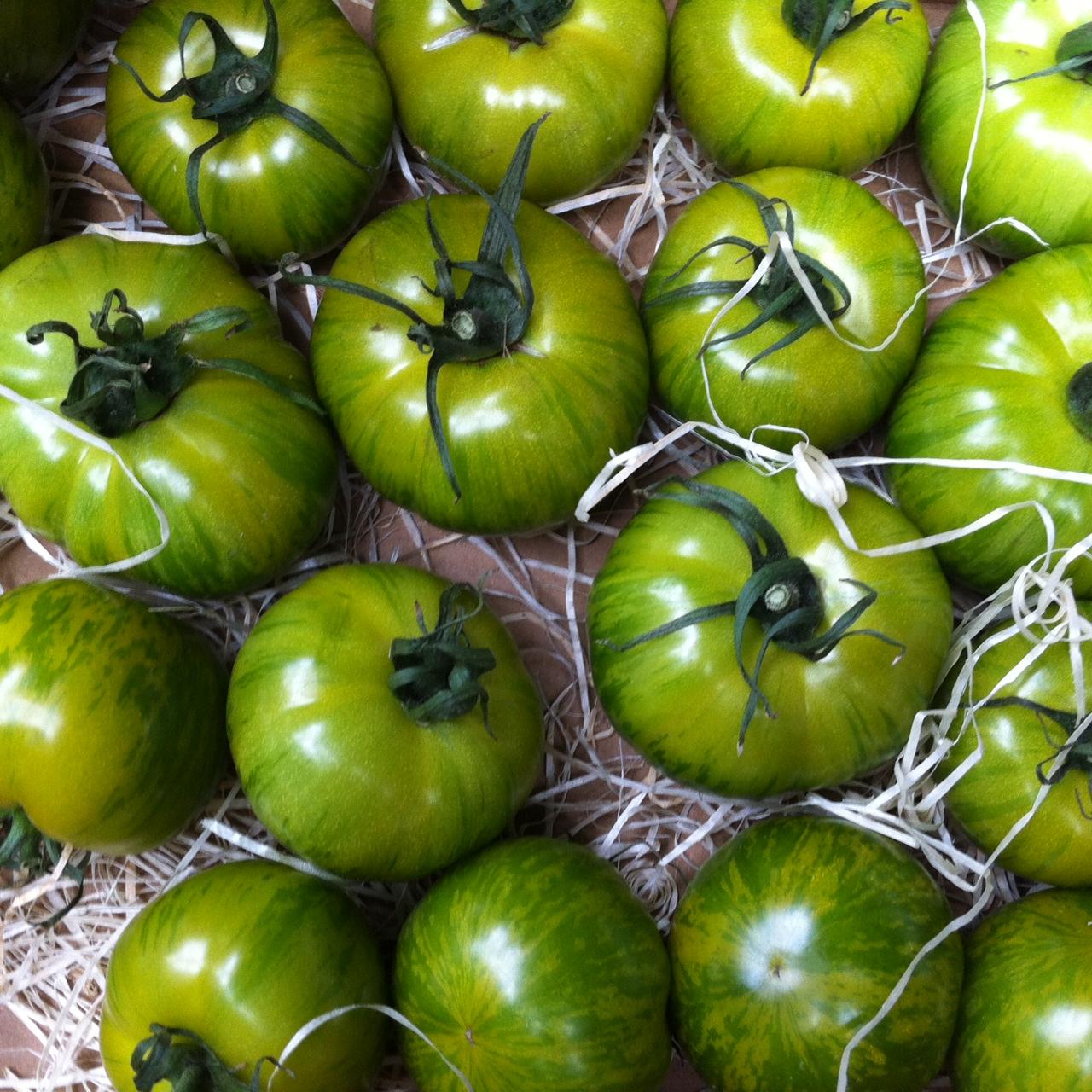 gruene Tomaten.JPG