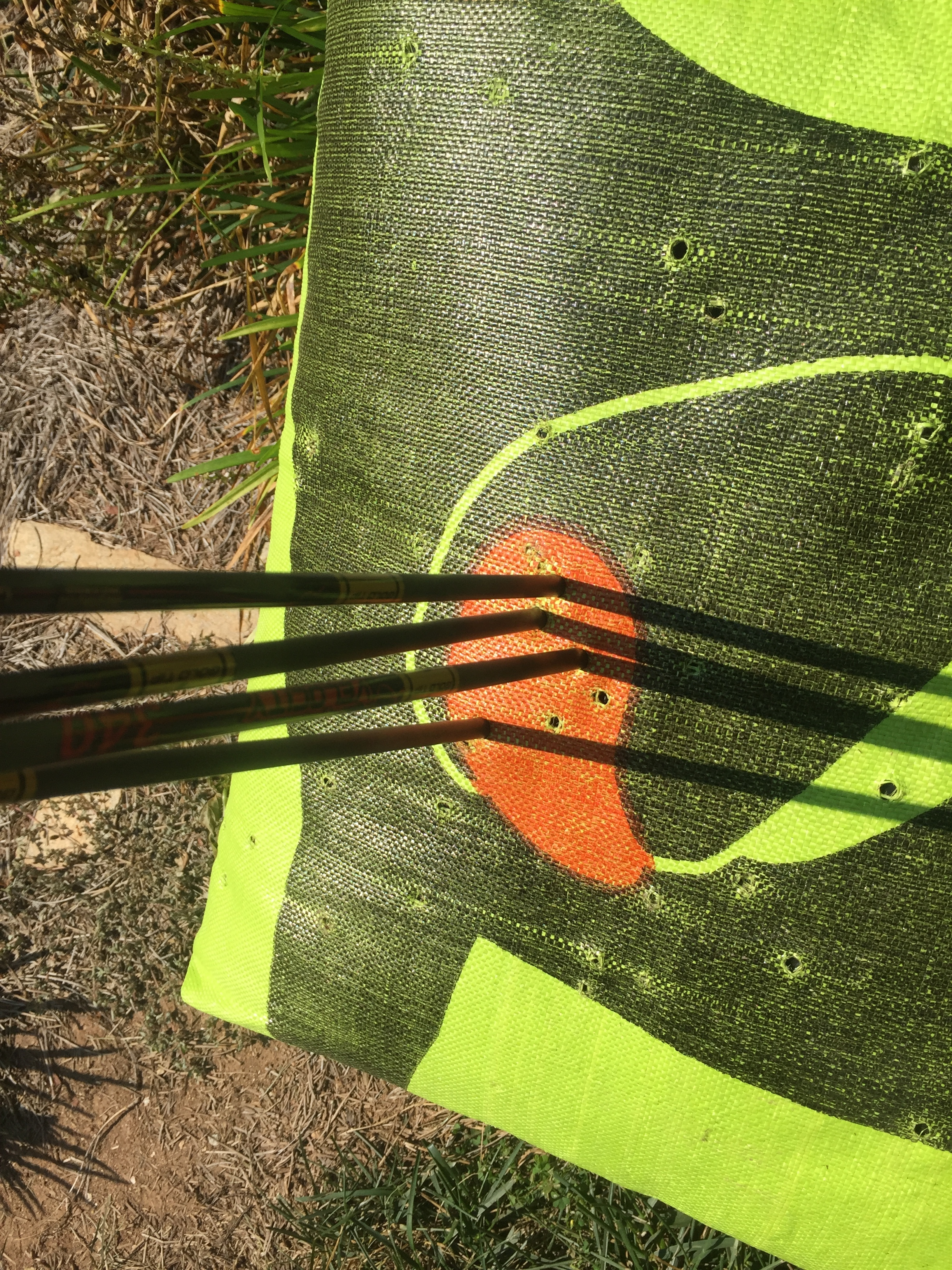 Sighting in the new bow. Looks like I am set for 20 yards!