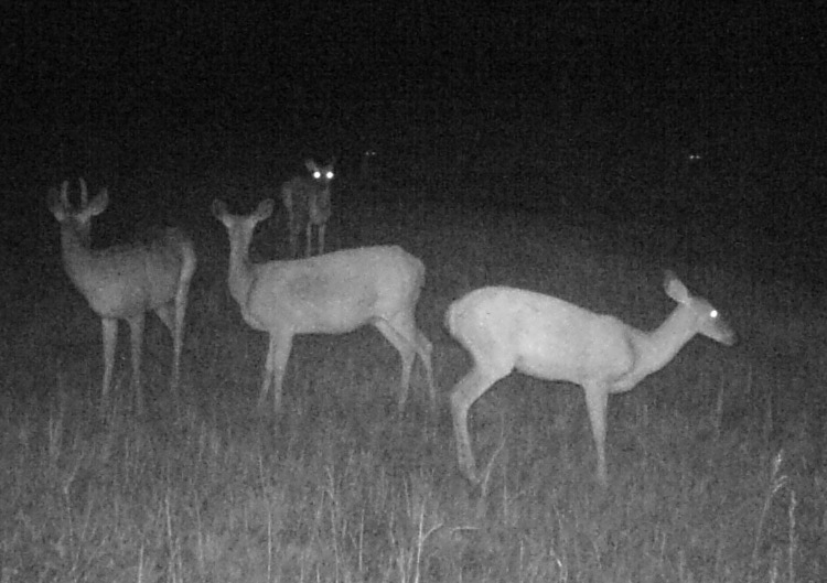 How many deer can you spot?