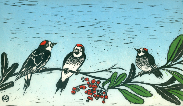 47 Holly Woolson_Acorn Woodpeckers and Toyon.jpg