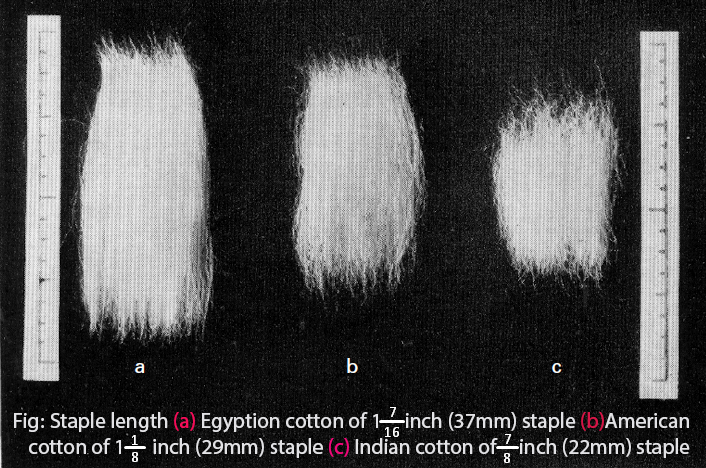 You can learn more about Staple Length at  The Textiles Study Center .