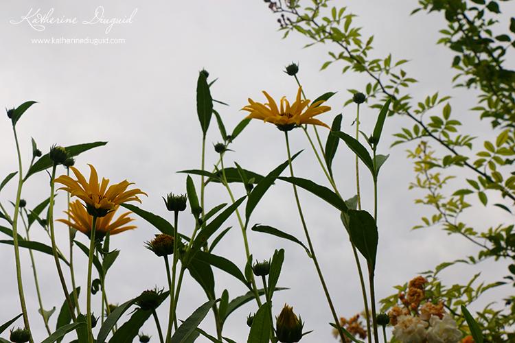 MonetsGardens8.jpg