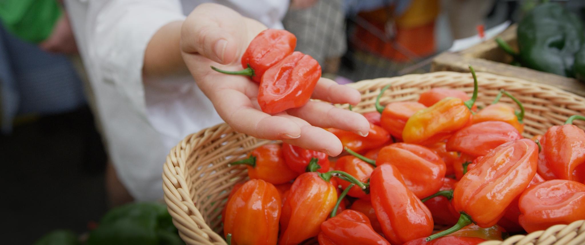 peppers_3.9.1.jpg