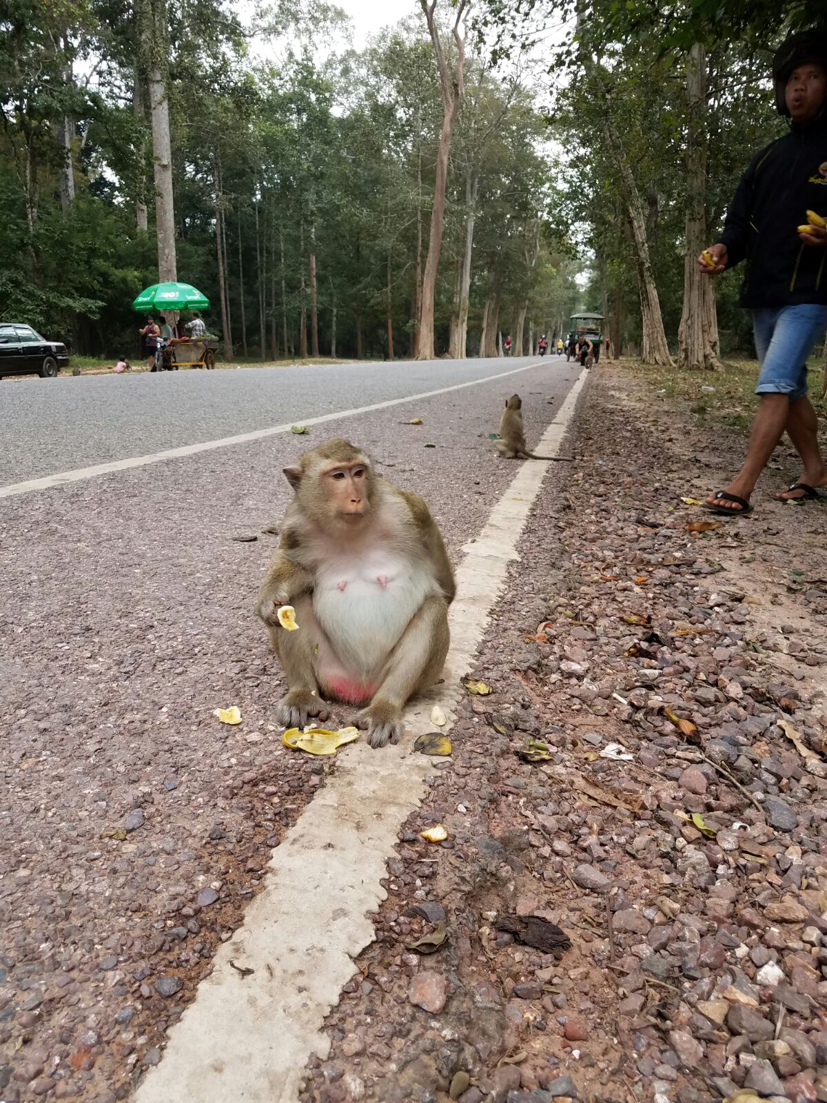 Just a monkey straight chillin with a banana