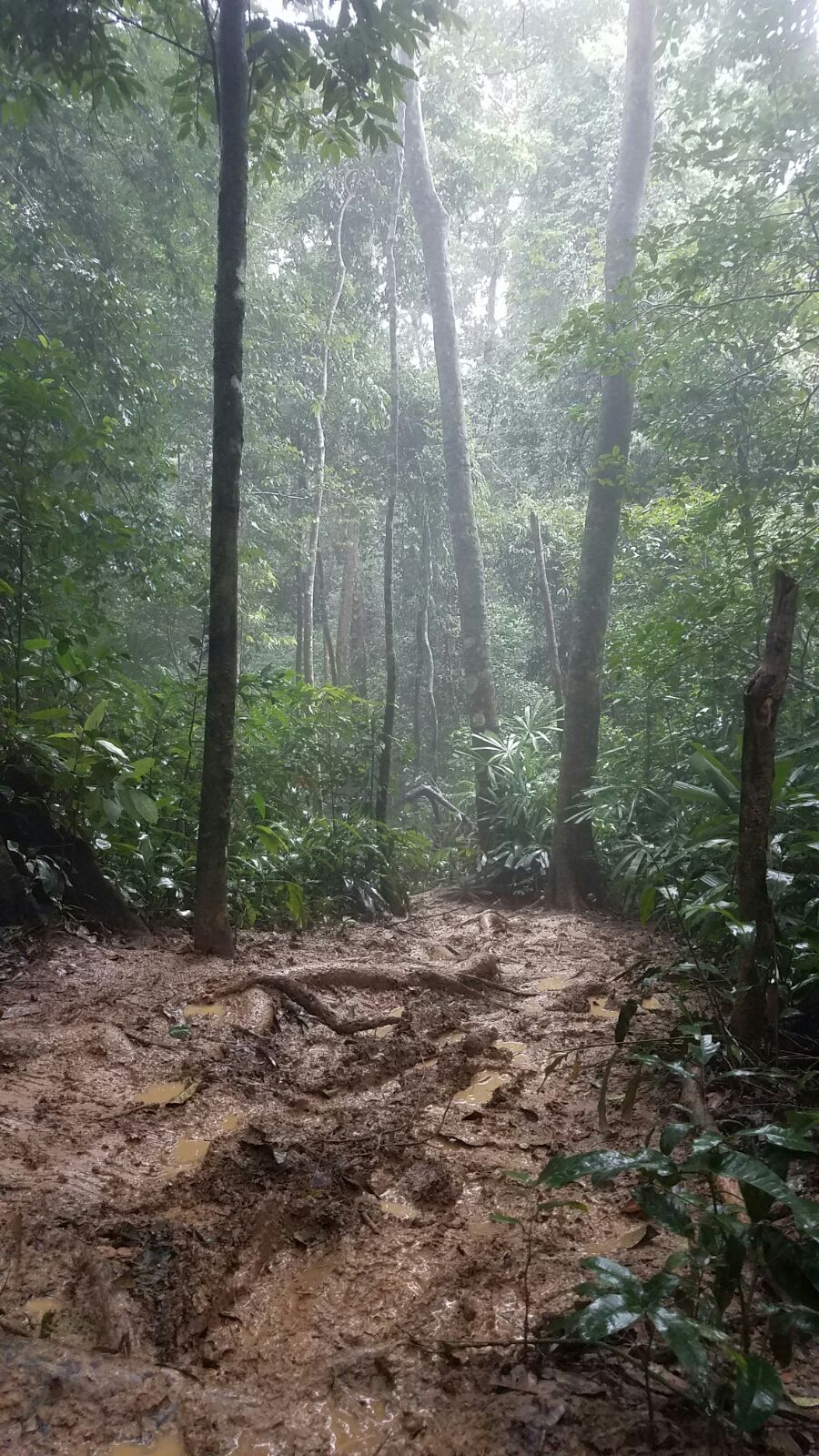 Photo by John Perez of our mucky trek through the jungle