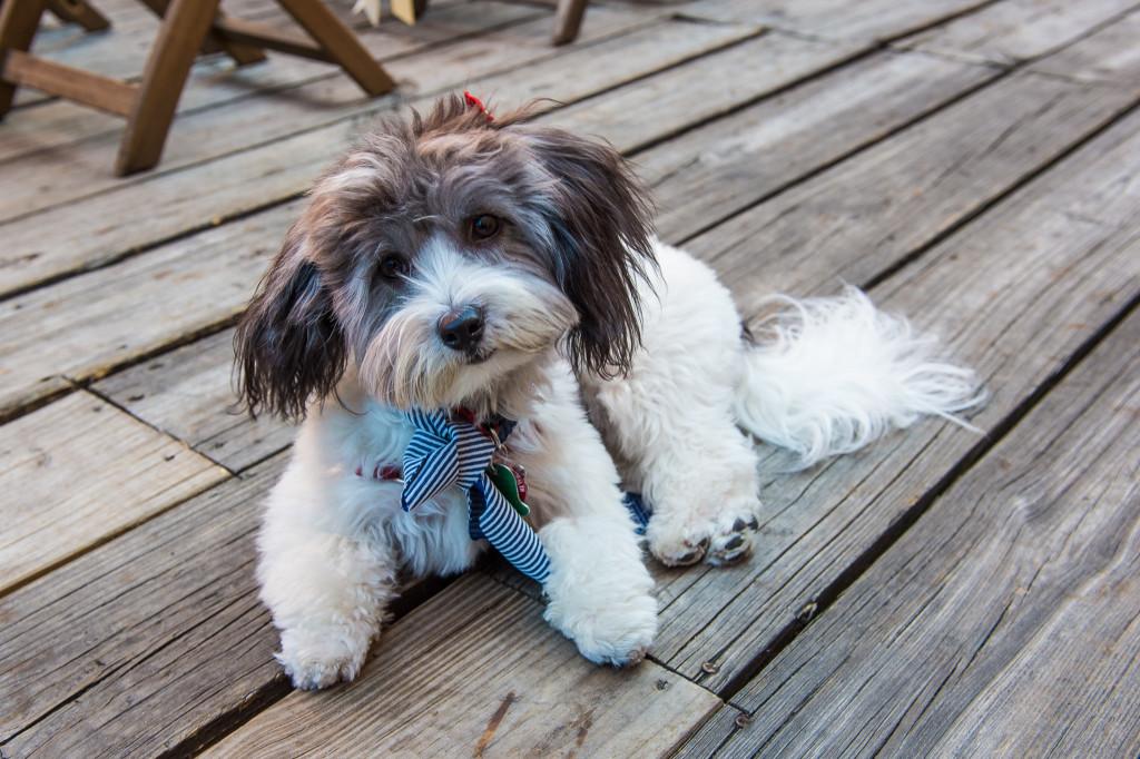 dog-as-ring-bearer-mymoon-brooklyn-new-york-wedding-1024x682.jpg