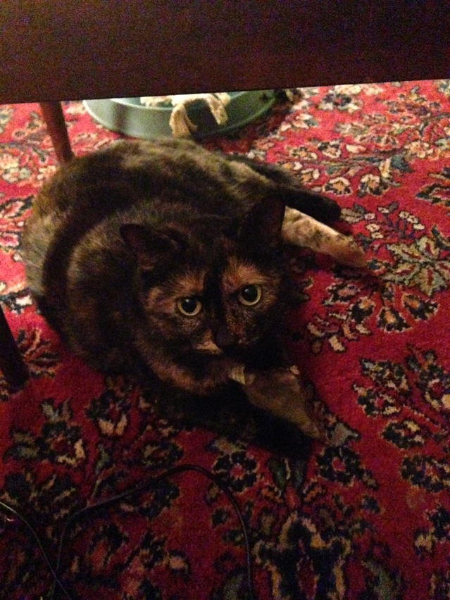 Rudy the Cat
