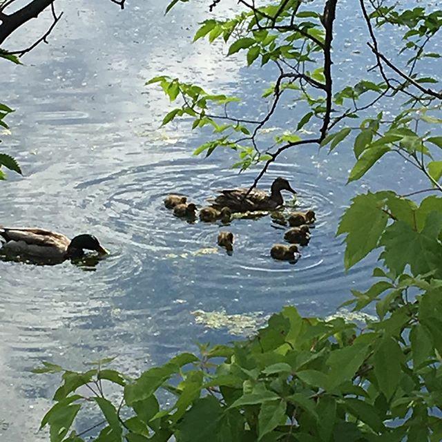 A família no lago