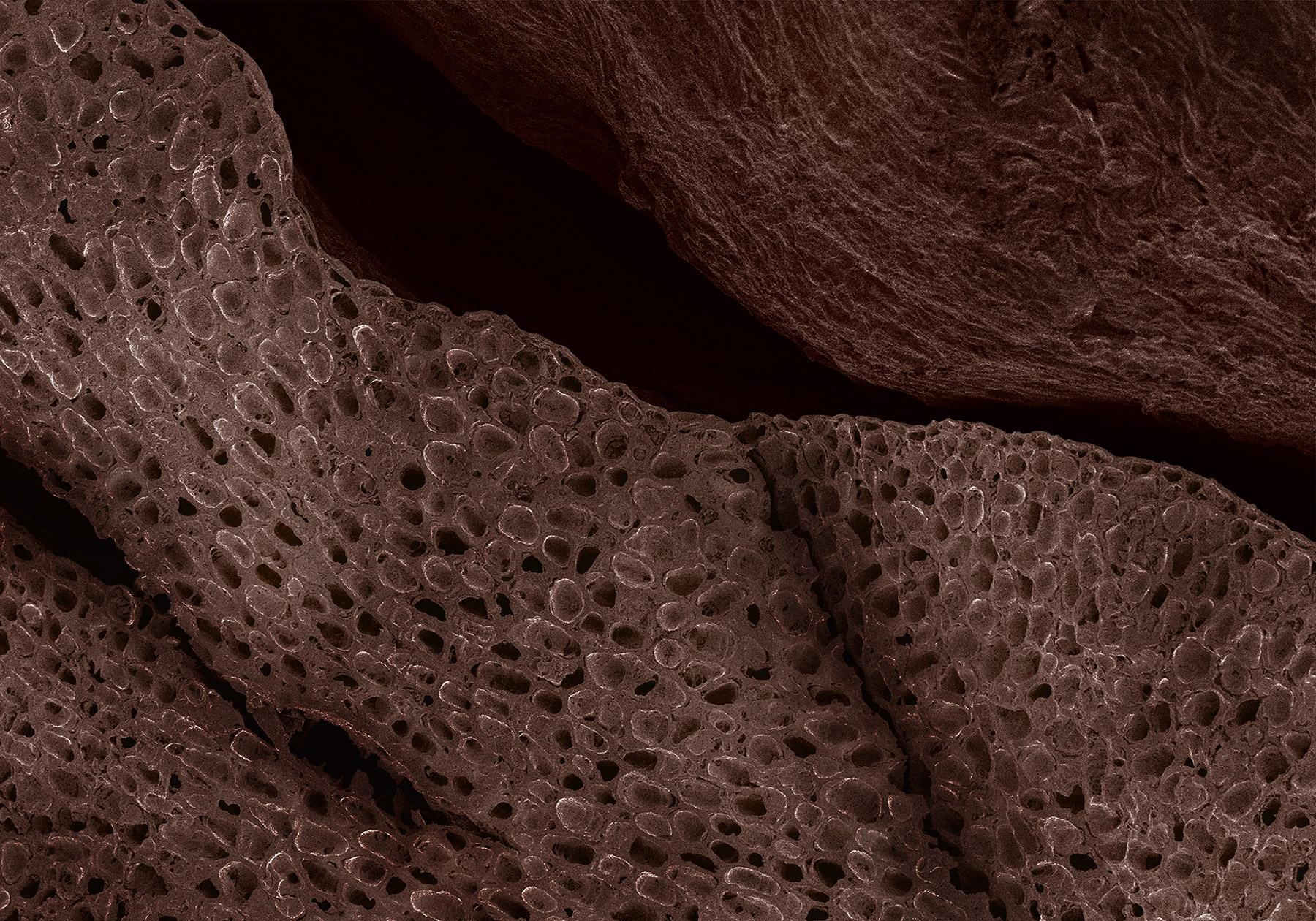 terra cibus no.7: coffee bean  80x magnification