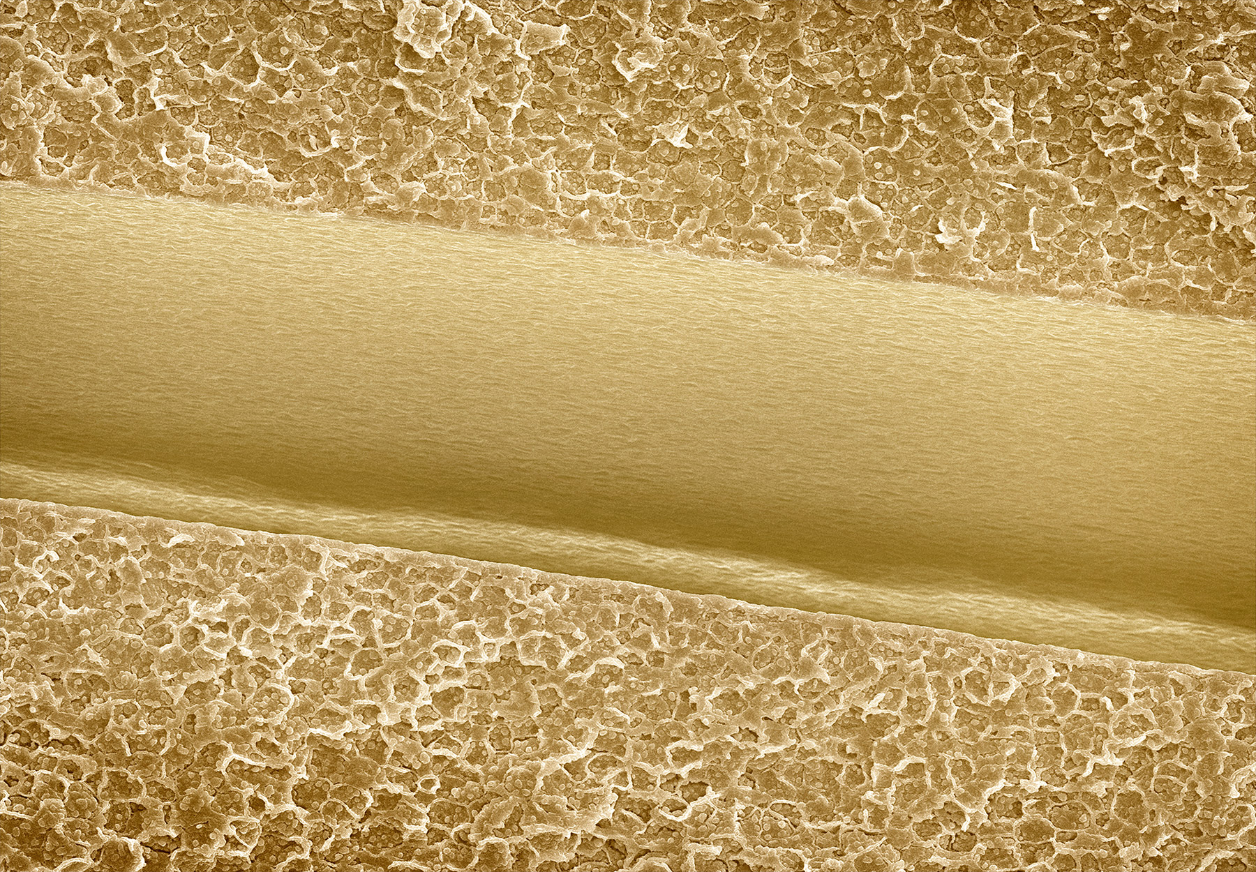 terra cibus no.8: almond  110x magnification