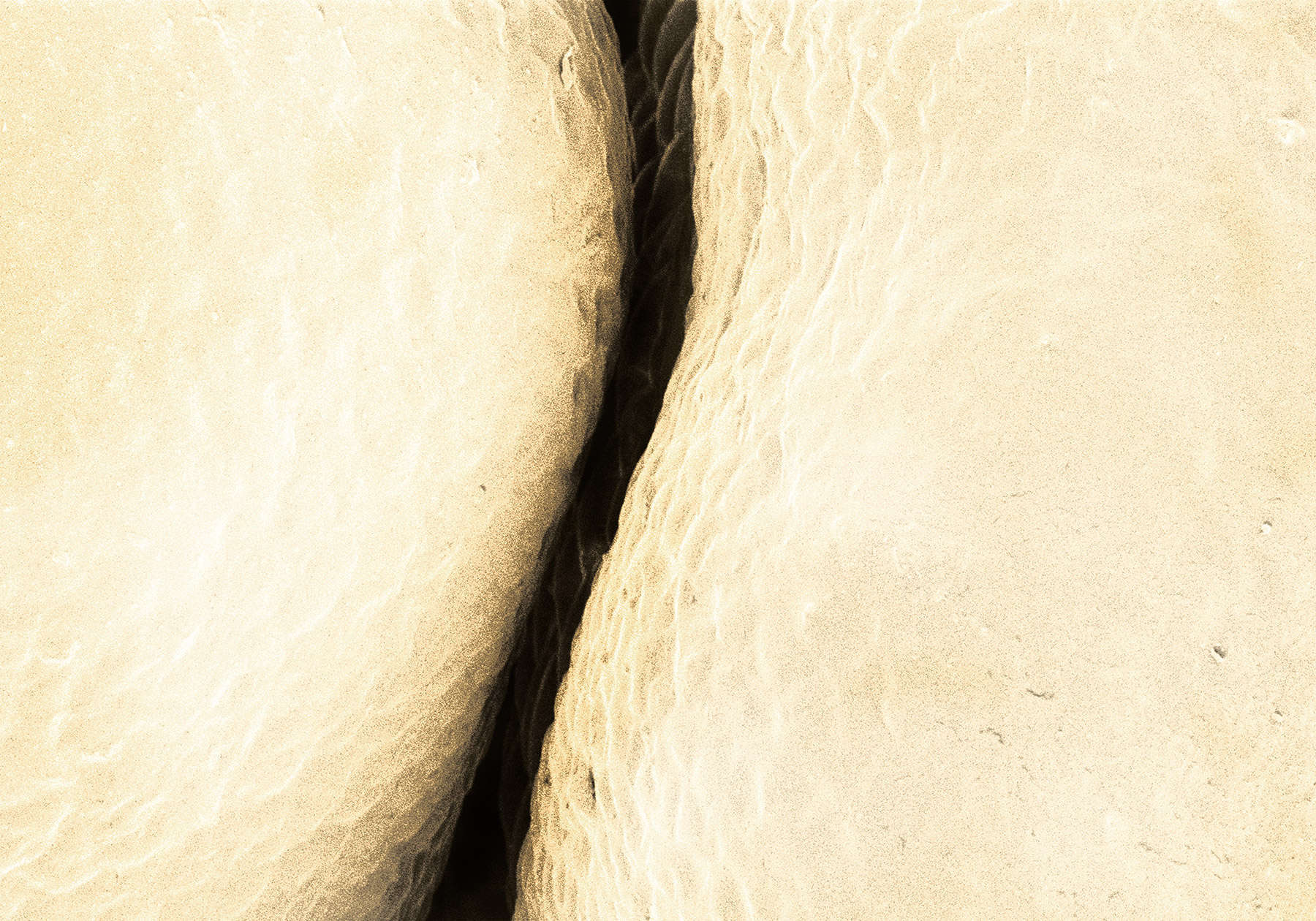 terra cibus no.11: cauliflower 2  850x magnification