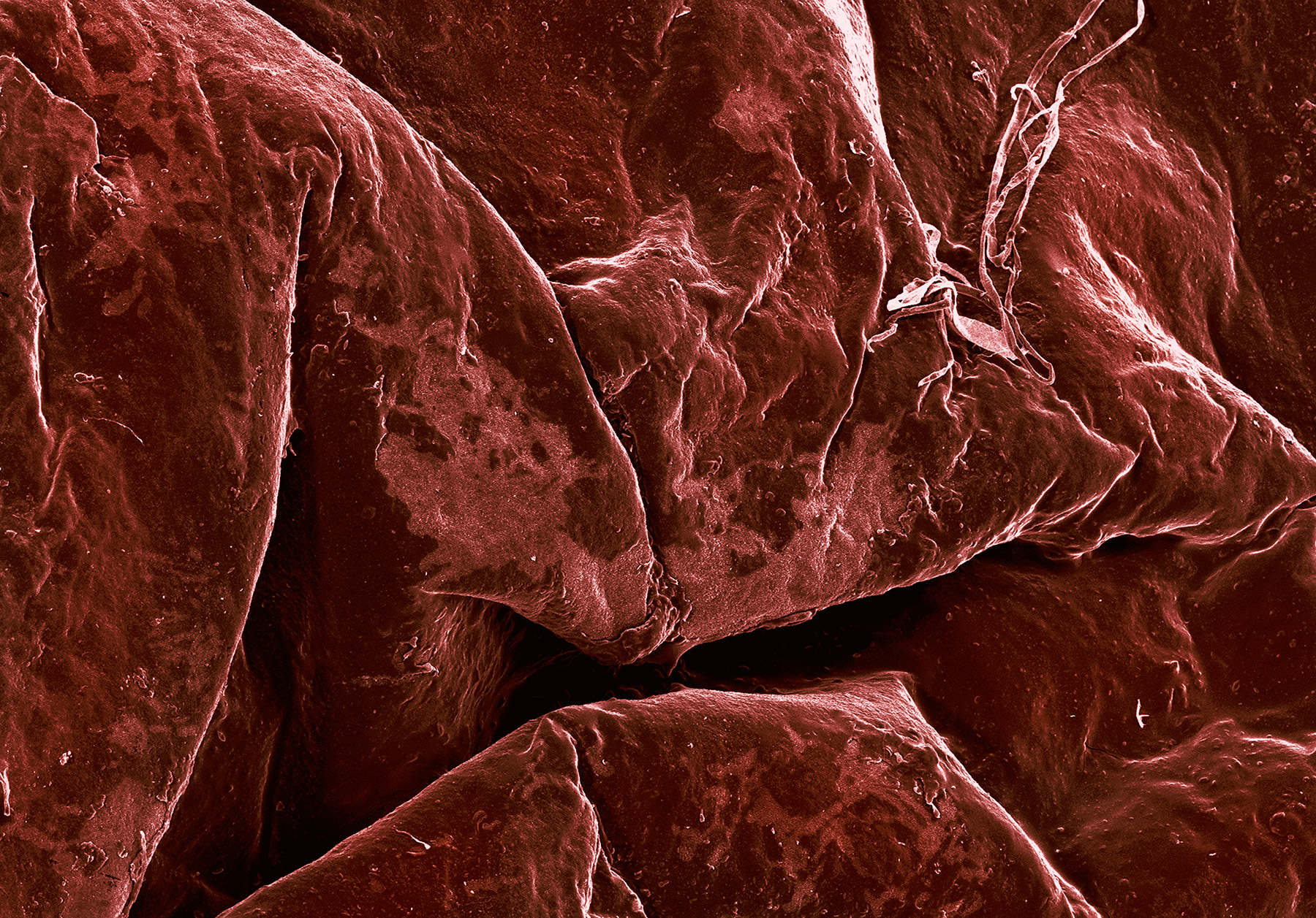 terra cibus no.21: raisin  35x magnification