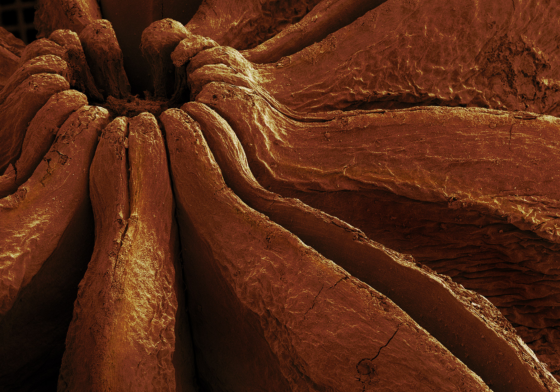 terra cibus no.30: star anise  14x magnification