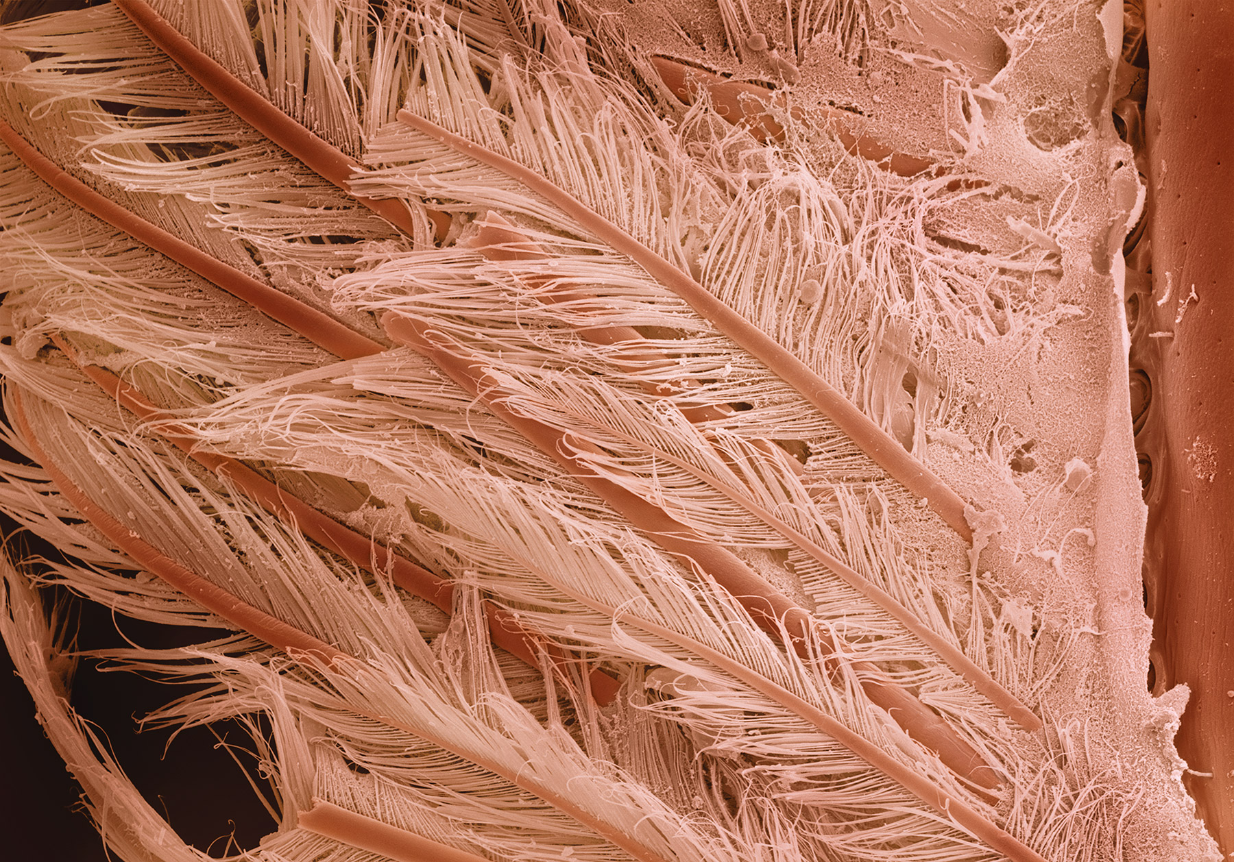 terra cibus no.32: shrimp tail  230x magnification