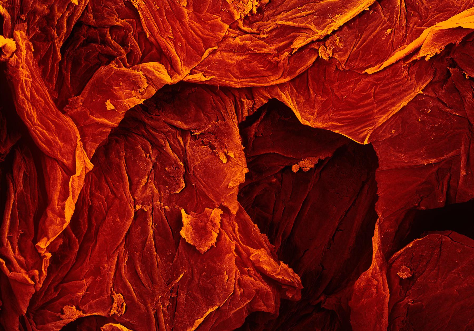 terra cibus no.35: sun-dried tomato 3  250x magnification