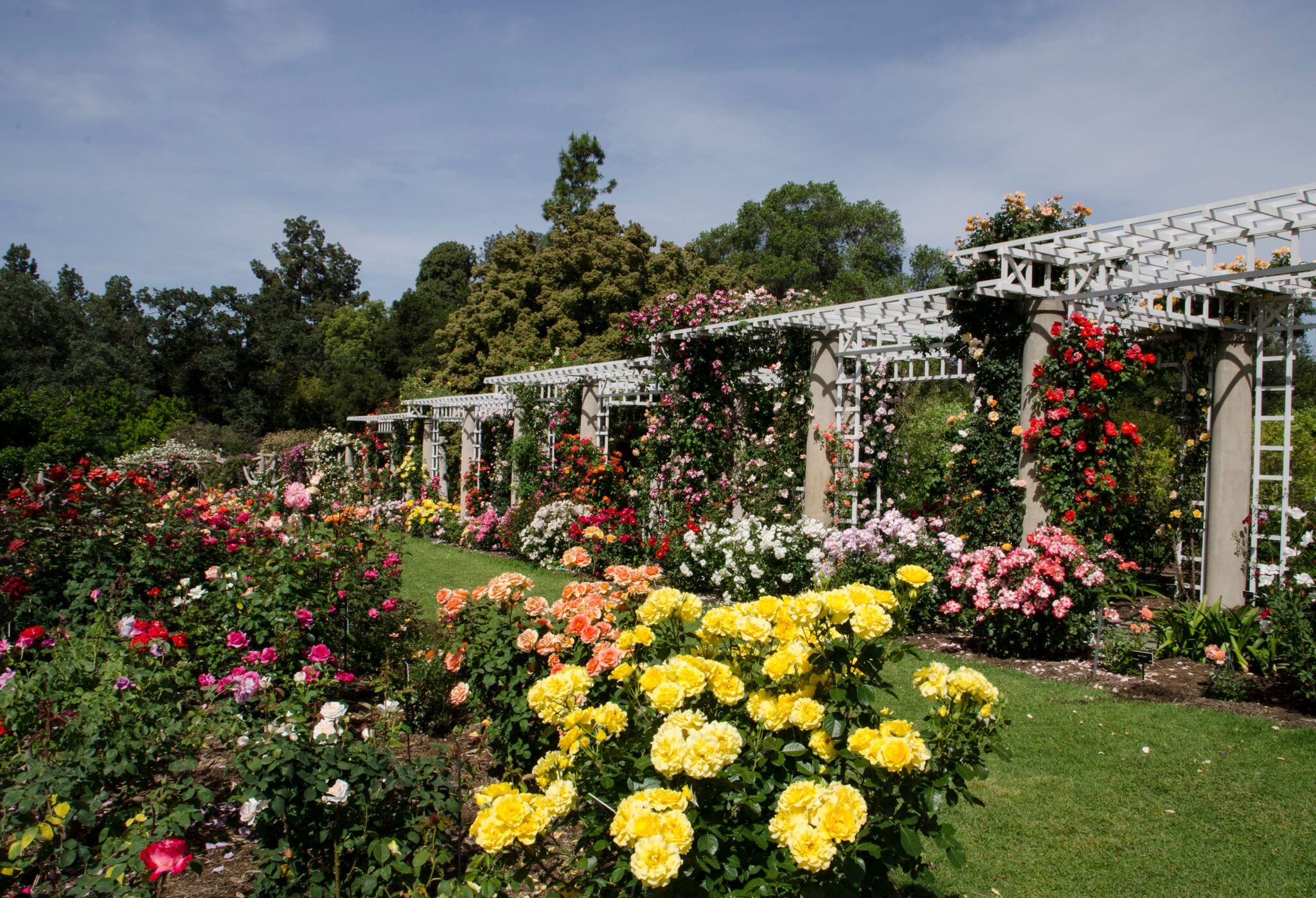 Rose Garden-trellis view 2017.jpg