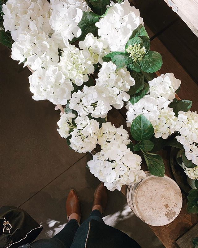 There's something about white hydrangeas. I can't wait to live in a house with a garden so I can grow all my favorite flowers.