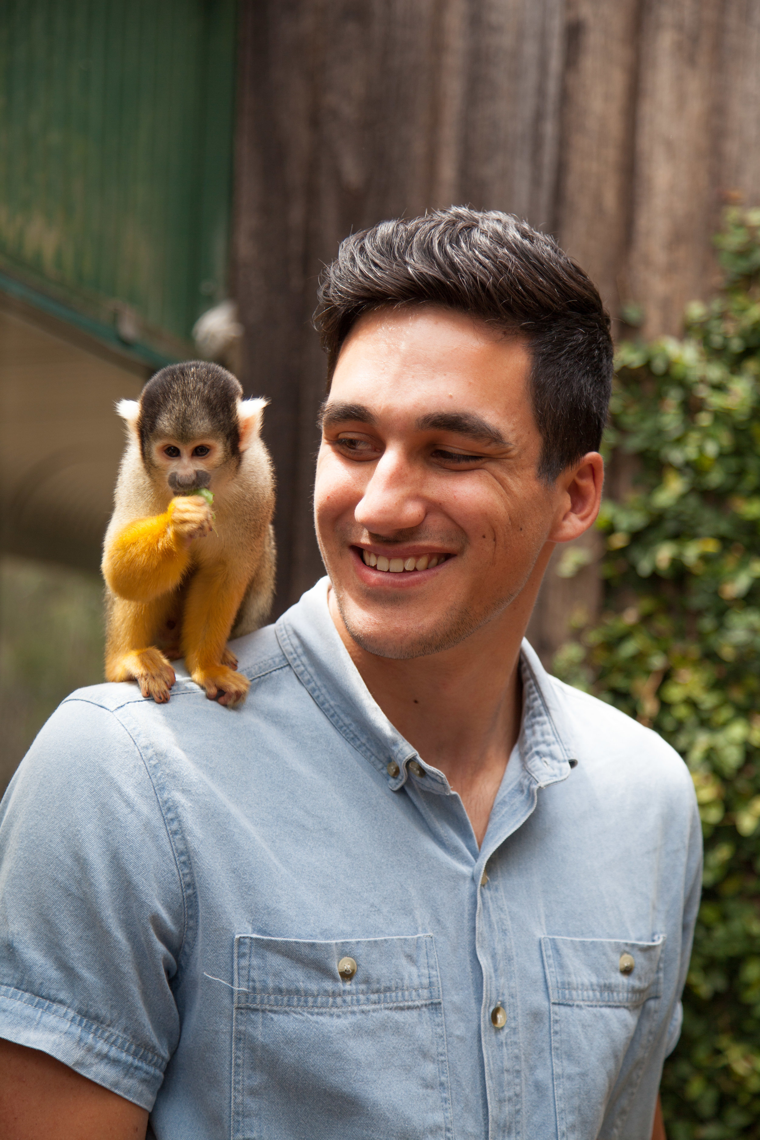 Sit with our Squirrel Monkeys