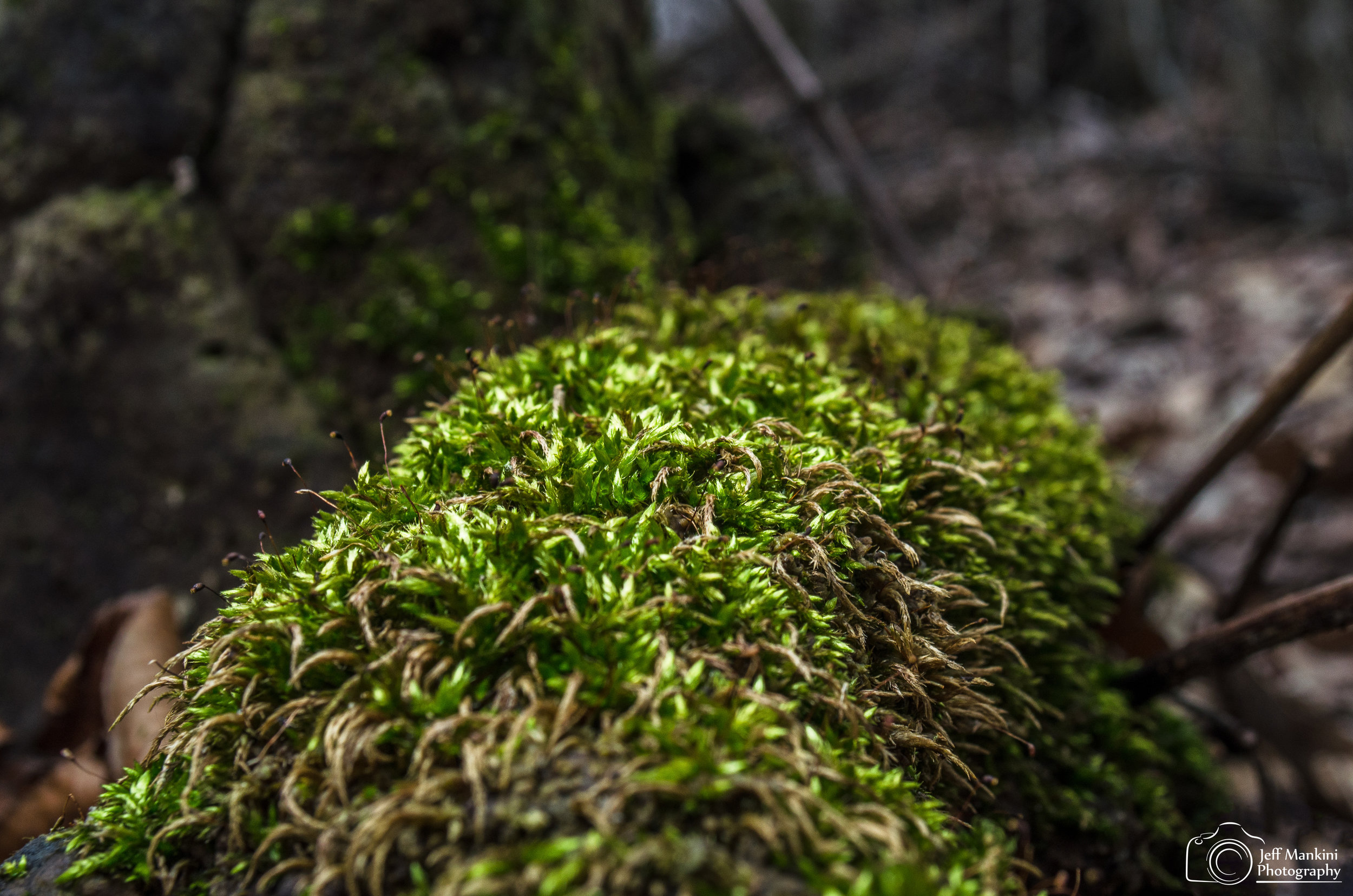 Neon Moss.jpg