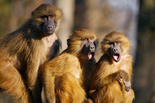 Shocked monkeys.jpg