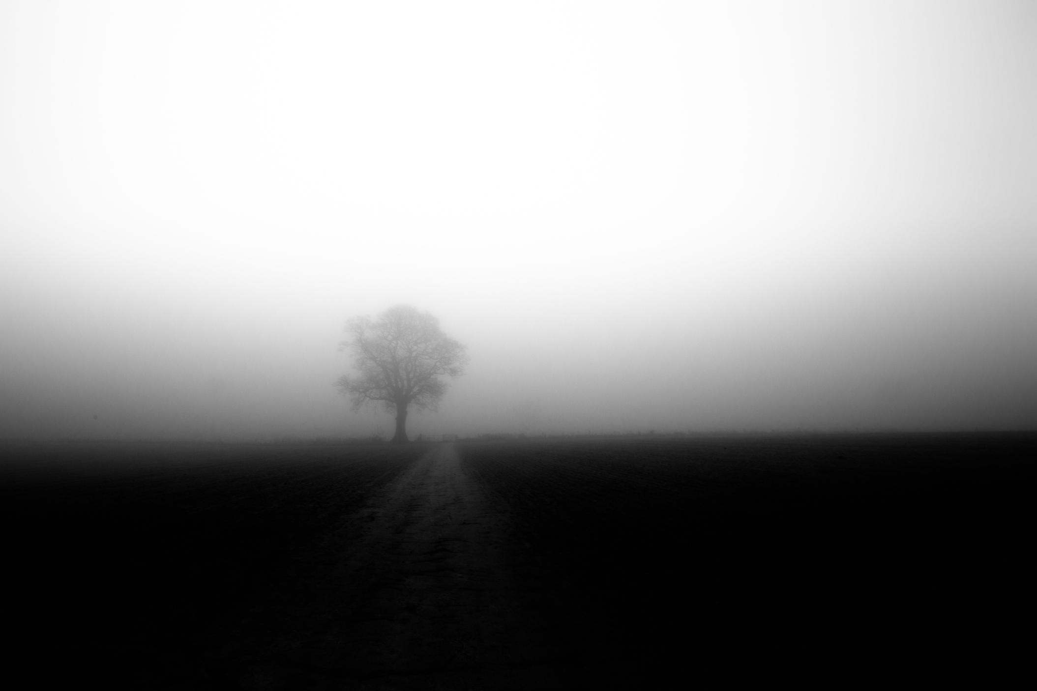 Foggy Morning - Hambledon.