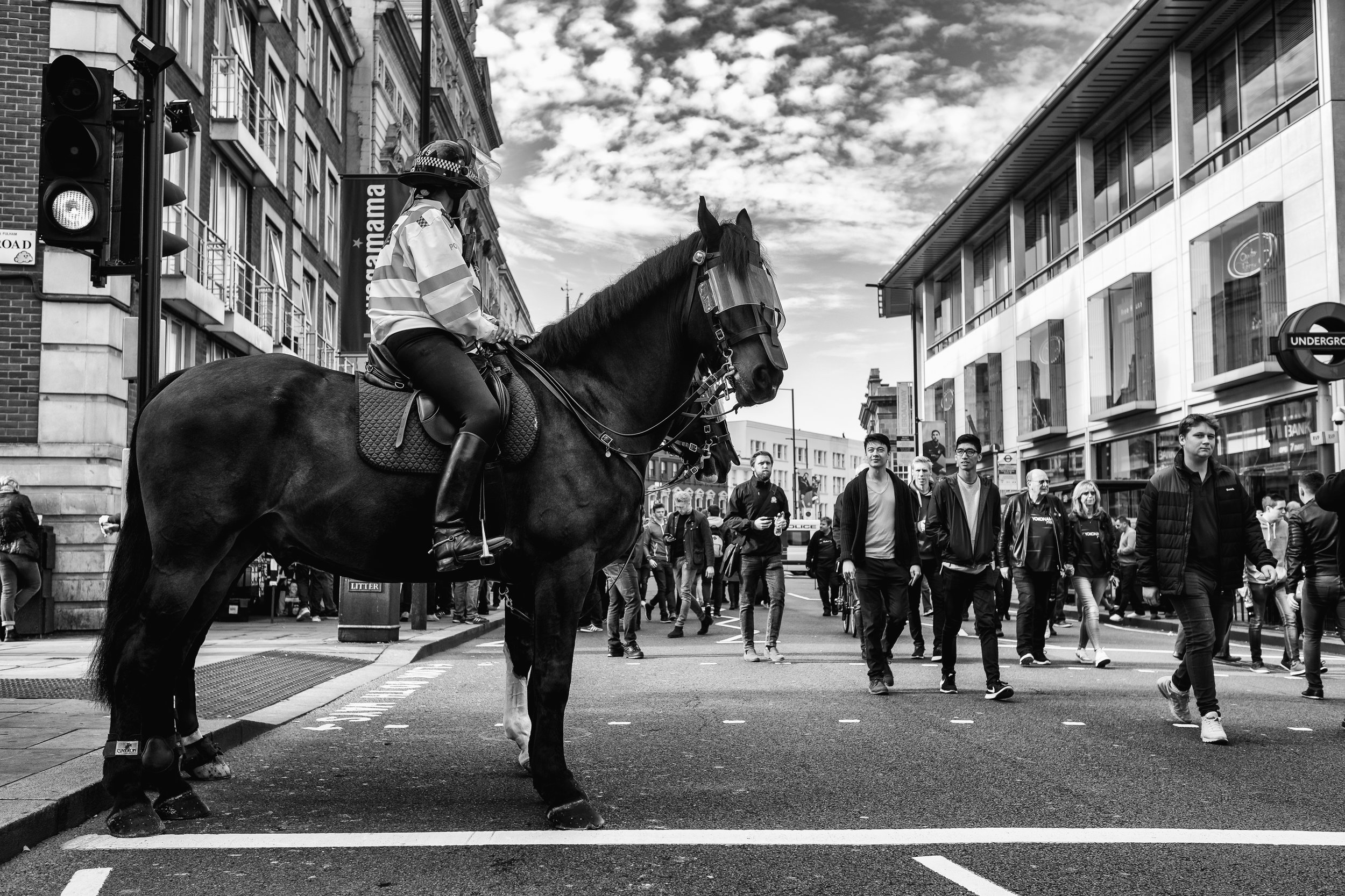 Horse On Broadway