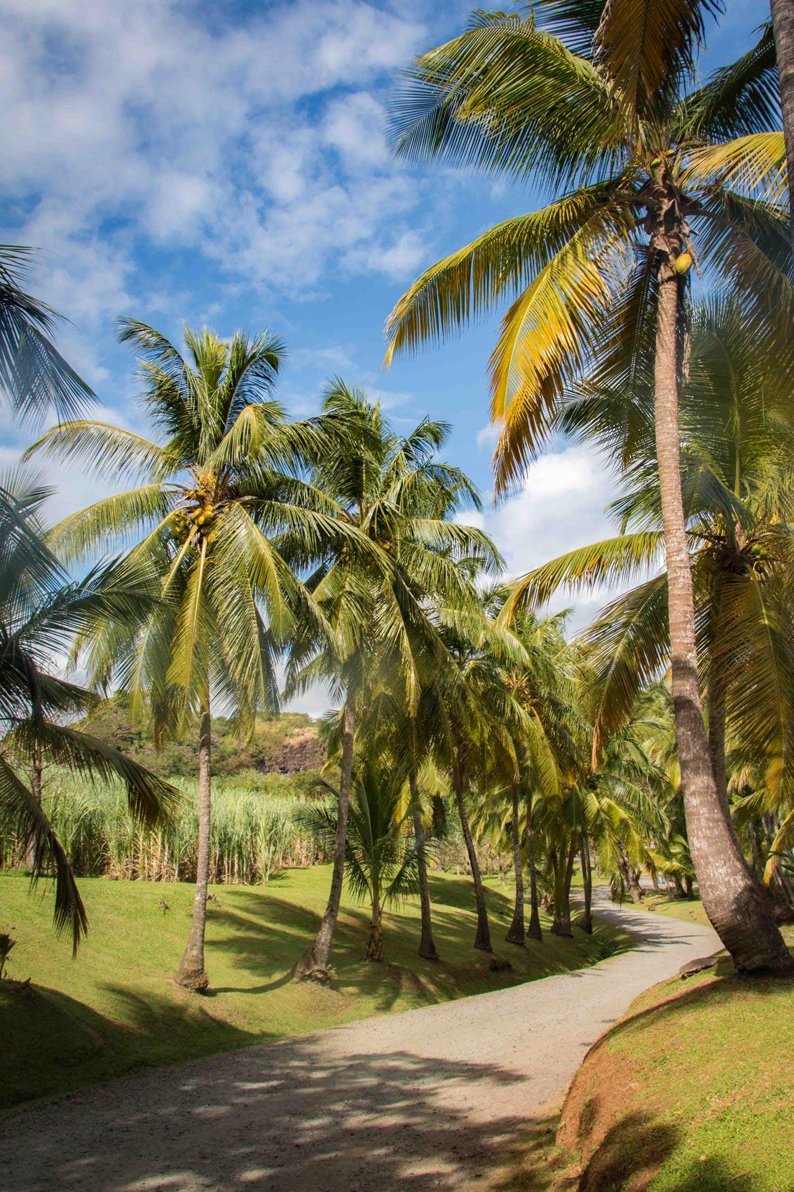 Entrée de l'Habitation Clément avec ses cocotiers