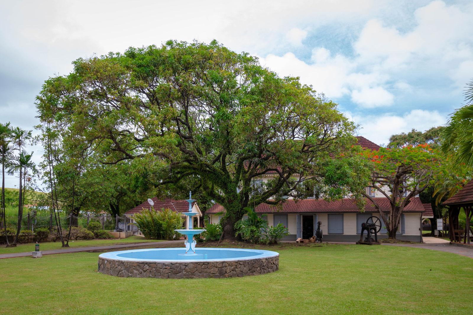 distillerie saint-james : arbre centenaire dans jardin