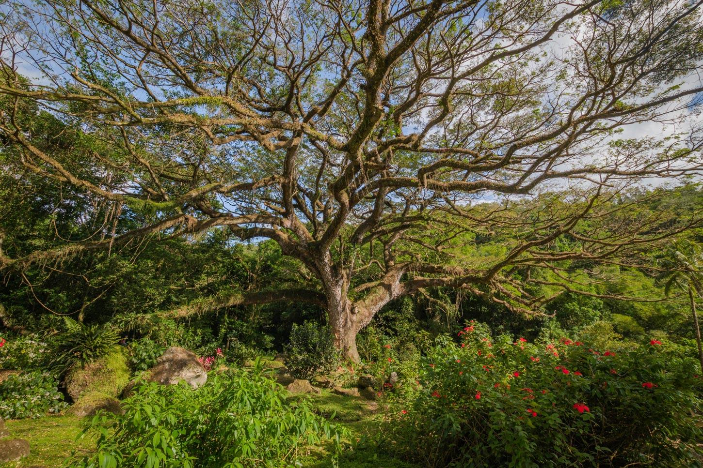 Martinique, habitation Ceron : le zamana