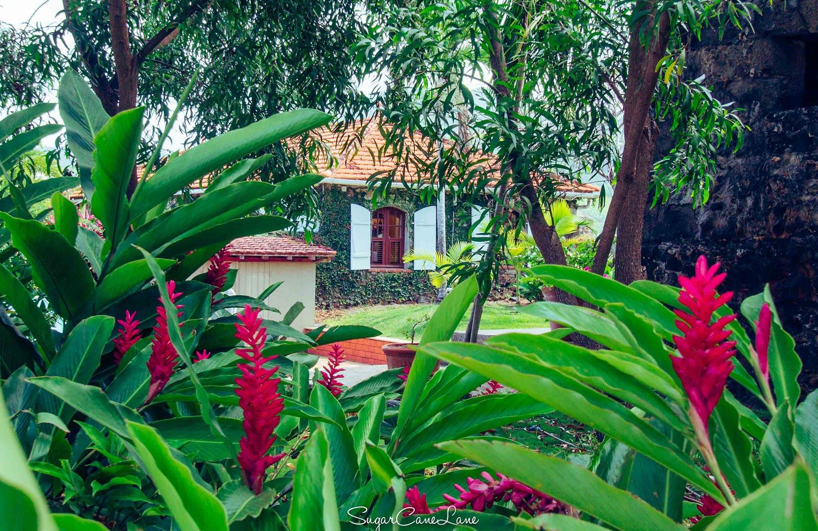 martinique, habitation du simon : allée de cocotiers