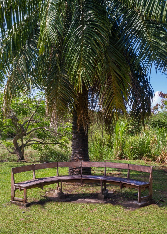 banc et palmier